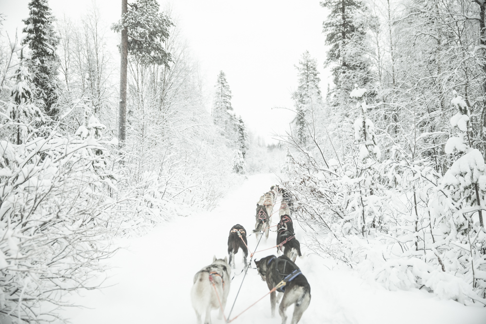 huskie sled ride
